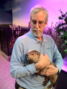 Lead Naturalist Bruce Beerbower with Miss Odessa (Odie) the groundhog